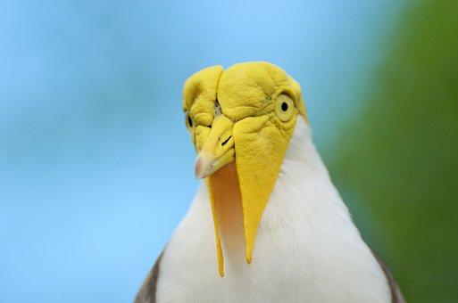 Bird, Exotic Bird, Yellow-headed Bird