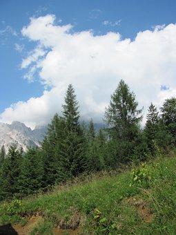 Pine, Mountain, Cadore, Belluno, Borca, Val De Cuze