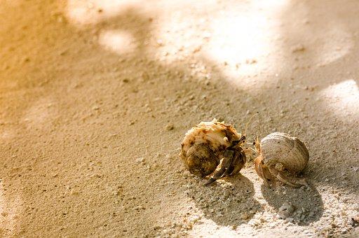 Hermit, Crab, Conversation, Sand, Love, Summer, Beach