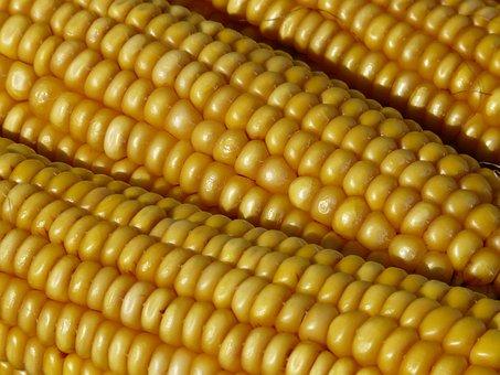 Corn, Corn On The Cob, Corn Kernels, Plant, Yellow