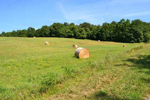 Hay Bales, Fields, Hay, Field, Agriculture, Grass