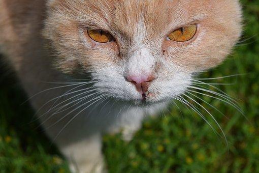 Cat, View, Close Up, Domestic Cat, Nature, Head, Watch