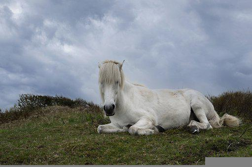 Horse, Animal, Meadow, White Horse, Equine, Mammal