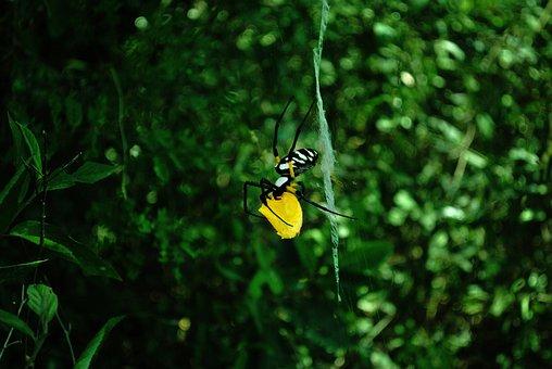 Spider, Web, Forest, Spider Web, Cobweb, Arachnid