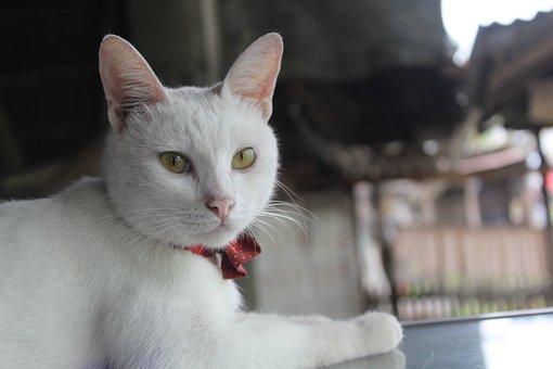 Cat, Pet, Kitty, White Cat, Feline, Mammal, Animal