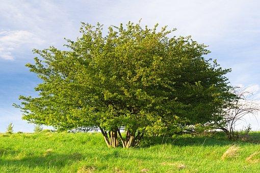 Tree, Grass, Meadow, Foliage, Plant, Spring, Landscape