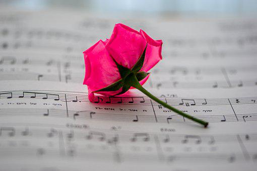 Sheet Music, Music, Rose, Flower, Musical Notes, Song