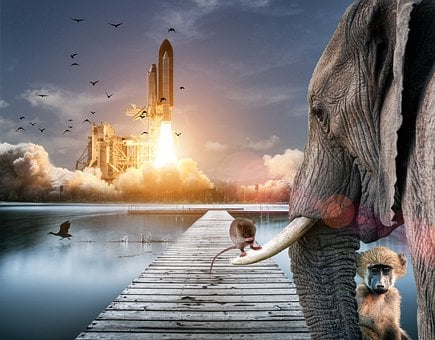 Environment, Animals, Wildlife, Bird, Elephant, Nature