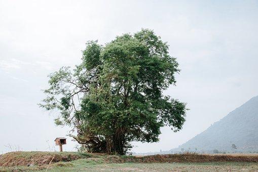 Tree, Field, Landscape, Meadow, Grassland, Nature