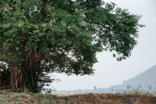Tree, Field, Landscape, Fog, Mist, Meadow, Grassland