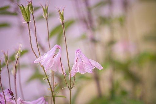 Flower, Pink, Flowers, Spring, Nature, Flora