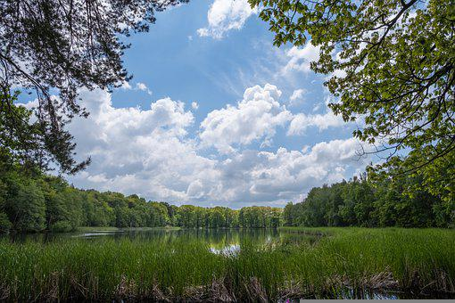 Lake, Forest, Grass, Trees, Woods, Water, Reflection