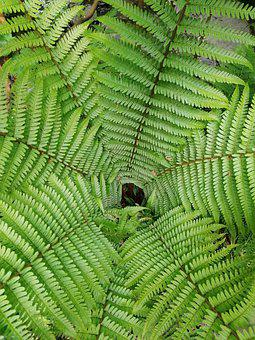Leaf, Ferns, Texture, Pattern, Foliage, Botany, Plant