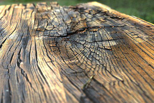 Wood, Structure, Texture, Tree, Background, Surface
