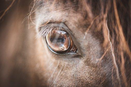 Eye, Horse, Pony, Horse Eye, Brown, Animal, Mammal