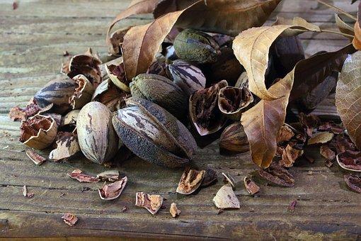 Pecan Nuts, Nuts, Fruit, Pecan, Ripe, Healthy, Crop