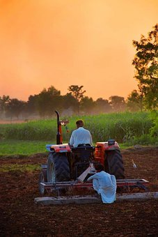 Man, Field, Wheat, Cultivation, Harvest, Organic