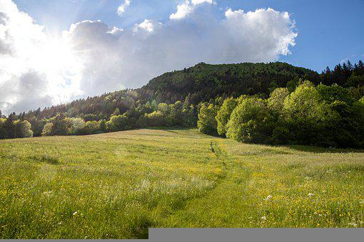 Mountain, Trees, Grass, Field, Meadow, Grasslands