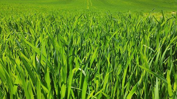 Grass, Green, Fields, Nature, Meadow, Outdoors, Summer