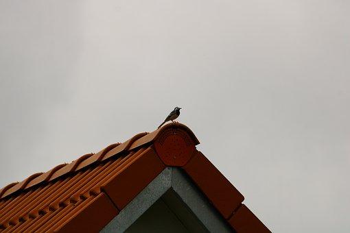 Bird, Roof, Stork, Aviary, Nature, Birds, Storchennest
