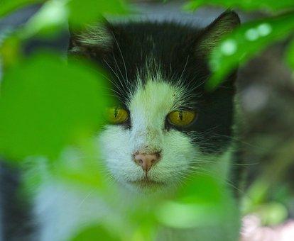 Cat, Stalk, Attention, Predator, Animal World, Nature