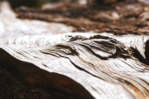 Wood, Tribe, Tree, Forest, Nature, Log, Texture, Gloomy