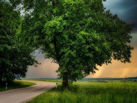 Tree, Deciduous Tree, Road, Thunderstorm, Evening Sun