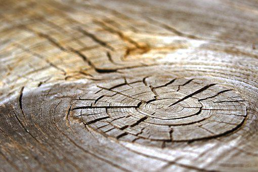 Wood, Structure, Texture, Tree, Background, Pattern
