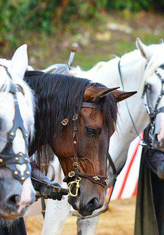 Horses, Animals, Bridle, Head, Saddle Horses, Mammals