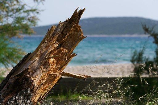 Log, Branch, Canceled, Forest, Nature, Wood