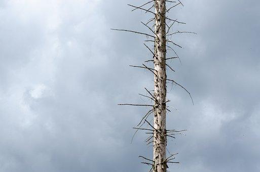 Waldsterben, Drought, Climate Change, Bark Beetles