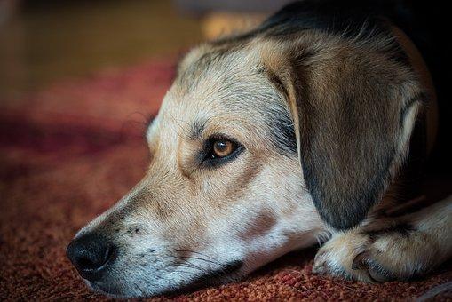 Dog, Head, Face, Snout, Muzzle, Dog Face, Pet, Canine