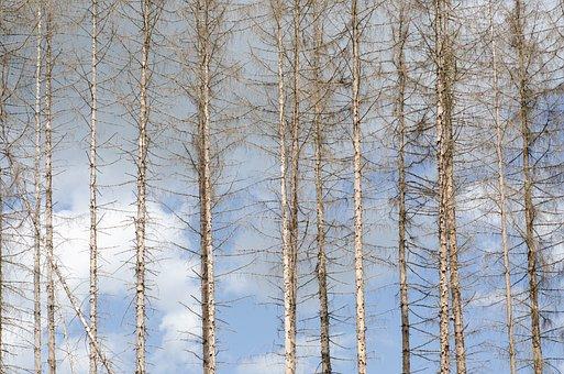 Waldsterben, Drought, Climate Change, Bark Beetles, Dry