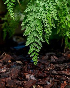 Fern, Sheet, Forest, Green, Leaves, Nature, Park, Mulch