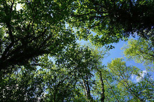Trees, Branches, Canopy, Sky, Crown, Leaves, Foliage