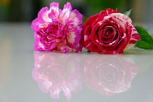 Flower, Rose, Carnation, Petals, Love, Beauty, Drops