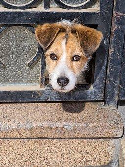 Dog, Puppy, Canine, Pet, Head, Animal, Mammal, Domestic