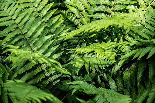 Fern, трава, зелень, Green