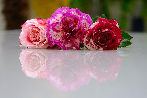 Flower, Rose, Petals, Love, Beauty, Roses, Pink