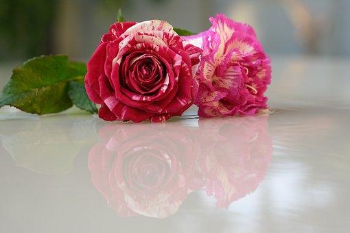 Flower, Rose, Petals, Love, Romantic, Pink, Reflection
