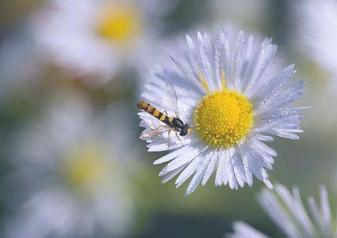 Fly, Summer, Macro, Bloom, Nature Flora, Fauna, Flower