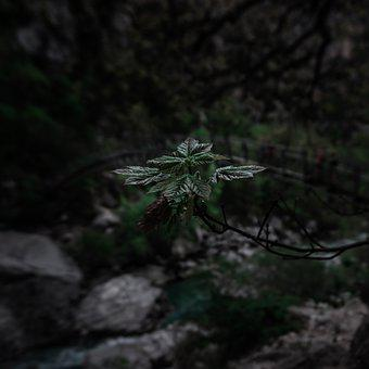 Leaves, Branch, Forest, Tree, Plant, Flora, Nature