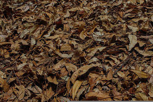Sheets, Fall, Autumn, Leaves, October, Nature, Golden
