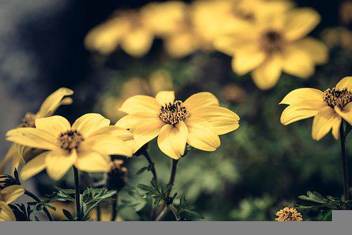 Flowers, Yellow Flowers, Petals, Yellow Petals, Bloom