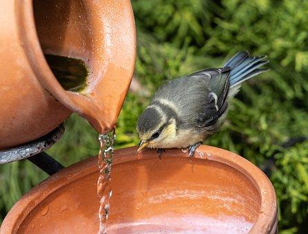Blue Tit, Bird Bath, Water, Tit, Small Bird