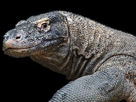 Dragon, Creature, Wildlife, Komodo, Giant, Animal