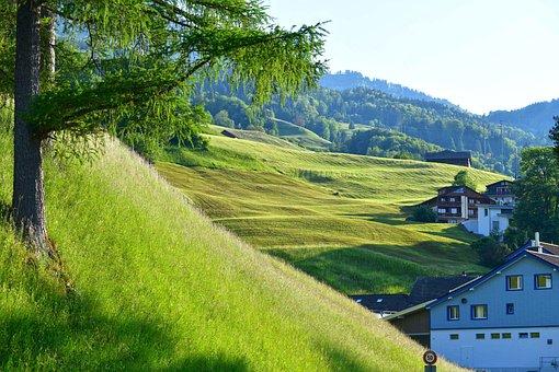 Village, Mountain, Lauerz, Houses, Buildings, Fields