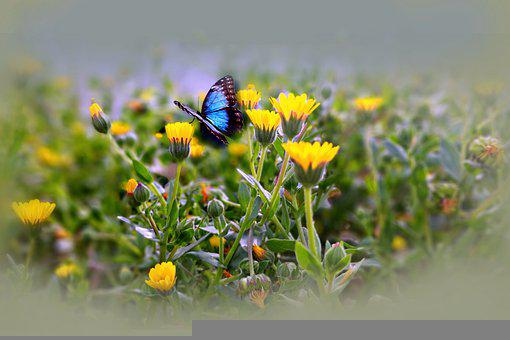 Flowers, Butterfly, Chamomile, Leaves, Nature, Spring