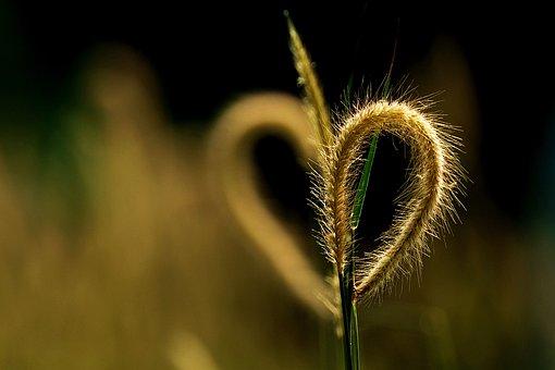 Wild Grass, Heart Shadow, Love Sign, Symbol