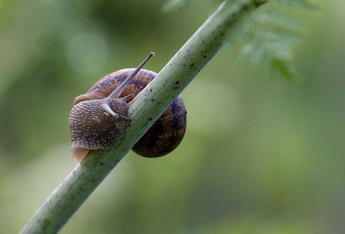 Snail, Animal, Stem, Mollusc, Mollusk, Gastropod, Shell